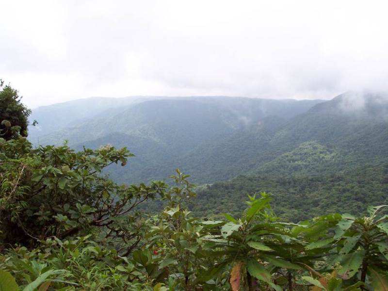 Costa Rican cloud forest near                 the continental gap
